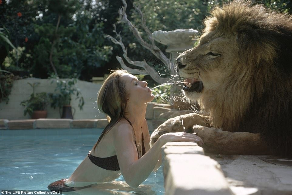 E pabesueshme  Njihuni me gruan që flinte dhe jetonte me një luan